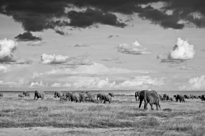 Africa black and white